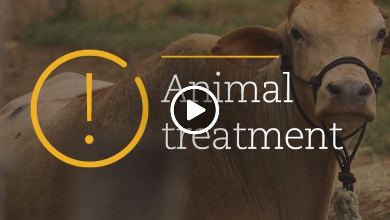 Video – Field Hospital to assist the animais