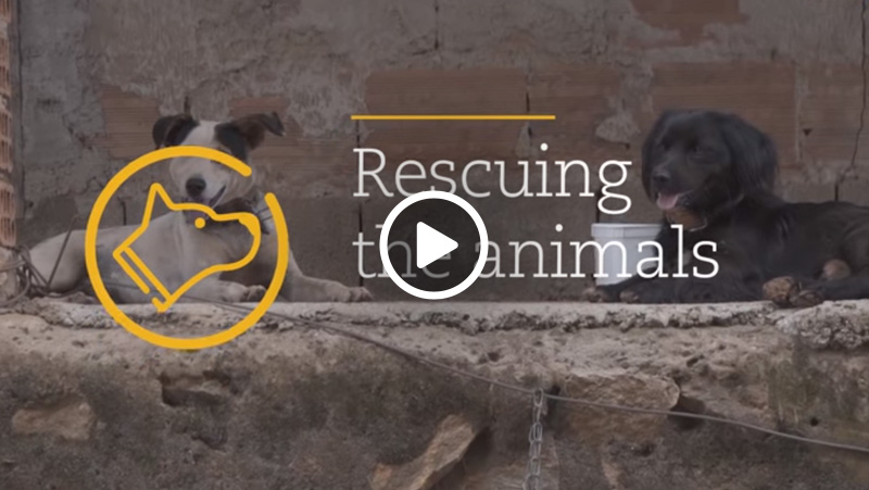 Video – Animals Rescue