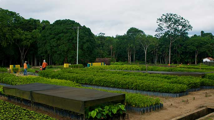 The tree nursery at the Vale Natural Reserve in Linhares, Espírito Santo, helps to create new forests, producing saplings of native Atlantic Forest species.