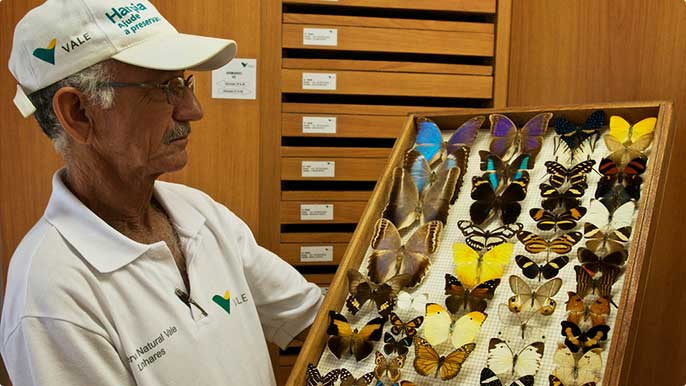At the Vale Natural Reserve, we maintain collections of butterflies and plants found in the region.