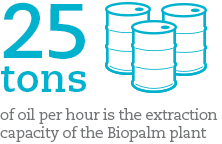 25 tons of oil per hour is the extraction capacity of the Biopalm plant