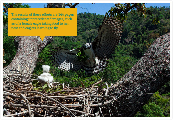 The results of these efforts are 144 pages containing unprecedented images, such as of a female eagle taking food to her nest and eaglets learning to fly
