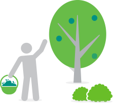 Light grey illustration with the drawing of a person collecting fruits of a green tree.