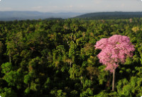 An aerial view of a lush, green forest with a pronounced pink tree in the right corner.